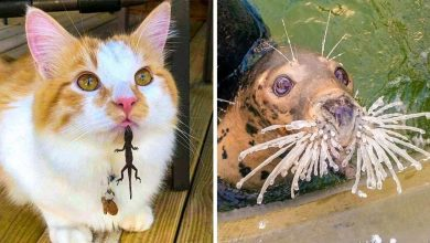Photo of 20 animals that can cheer up your day better than any comedian