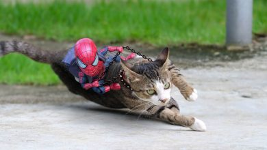 Photo of 30 pics Cats Pose With Baby-Spider Man By A Thai Artist To Make Some Amazing Creations.