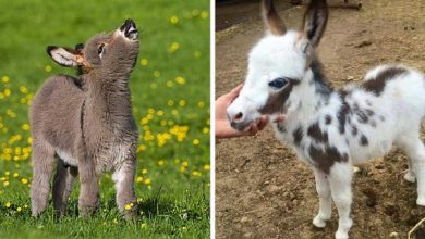 Photo of These Cute Baby Donkeys Will Make Your Day