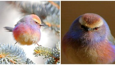 Photo of This Bird Has A Beautiful Rainbow Coloring Named As The White-Browed Tit-Warbler