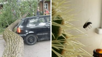 Photo of 25 Absurd Coincidences That are Hard to Believe Happened