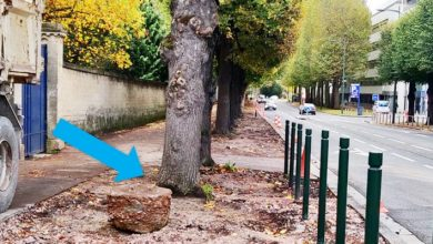 """Photo of Caen Decides To Remove The Asphalt From The Sidewalks To Make The Tree Roots """"Breathe"""""""