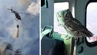 Photo of This Owl Flew Inside A Helicopter And Stood Next To The Pilot Who Was Putting Out A Fire