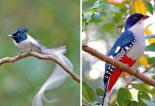 Photo of 11 Beautiful Birds That Look Like They Were Painted By A Great Artist.