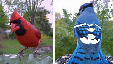 Photo of Woman Connects Camera To Bird Feeder And Captures 20 Stunning Images