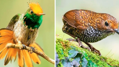 Photo of 19 Birds So Perfect They Don't Seem Real