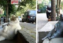 Photo of City's Most Beloved Cat Dies. Statue Created In His Honor At His Favorite Spot
