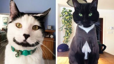 Photo of The 21 Most Unusual Cats, Born With A Particular Spot On The Fur That Makes Them Unique In The World