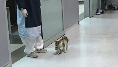 Photo of Kitten Takes Her Sick Baby To The Hospital And Waits To Be Treated
