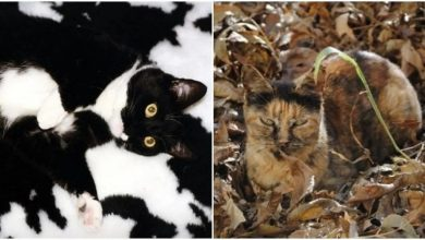 Photo of 21 Camouflage Cats That Blend Perfectly With Household Items