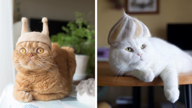 Photo of These Cute Hats Are Created By An Artist With Its Own Hair