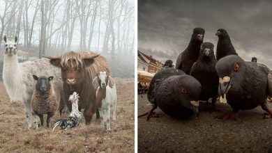 Photo of 20 Animal Photos That Look Like Music Album Covers