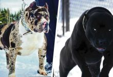Photo of These Are The 10 Most Fearsome Dog Breeds That Exist