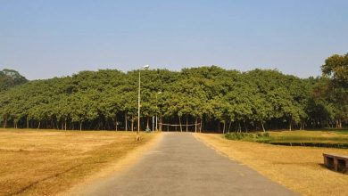 Photo of The Amazing 19,000 Square Meter Forest In India Made Up Of One Tree