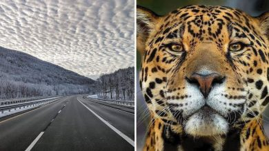 Photo of 16 Amazing Photos That Show How Fascinating Nature Is
