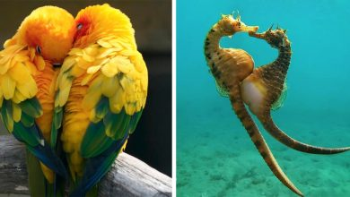 Photo of 10 Animals With Which Nature Shows Us That Love Is Eternal