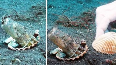 """Photo of A Diver Convinces An Octopus To Abandon The Plastic Cup He Had Chosen As """"Home"""""""
