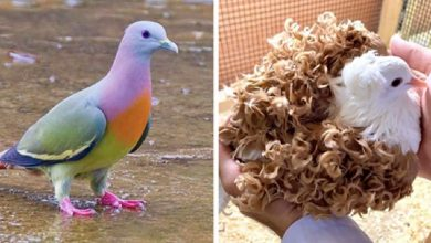 Photo of 29 Of The Most Beautiful Pigeon Species In The World