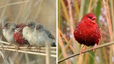 Photo of 20 Photos Of Gorgeous Birds Called Strawberry Finches