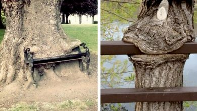 """Photo of 15 Trees That Couldn't Help But """"Eat"""" Everything In Front Of Them"""