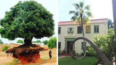 Photo of 10 Trees That Didn't Want To Die Adapting To Their New Life