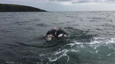 Photo of They Thought They Found A 'zombie' Leatherback Turtle Until They Saw It Up Close