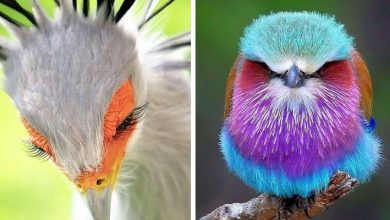 Photo of 15 Photos Of Birds So Fascinating And So Special That They Seem To Come From Another Planet