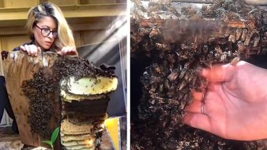 Photo of She Moves An Entire Beehive With Her Bare Hands. The Fascinating Video Of The Woman Whispering In Bees' Ears