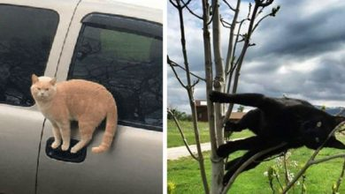 Photo of Cats Defying The Laws Of Physics. 13 Funny Photos Of Cats Taken In The Most Absurd Poses.