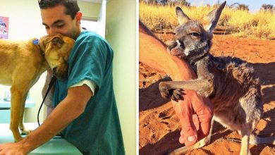 Photo of 13 Animals That Did Not Forget To Thank Those Who Rescued Them.