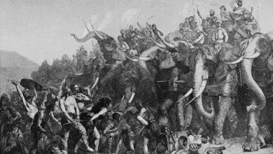 Photo of Hannibal's Unsolved Mystery, Where Did His War Elephants Come From?