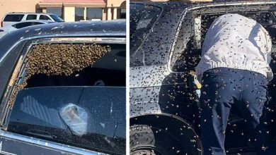 Photo of Plainclothes Firefighter Saves Motorist With 15,000 Bees In His Car.
