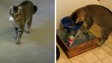 Photo of He Builds A Machine To Allow His Cat To Hunt For Food.