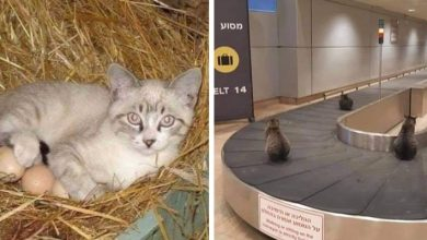 Photo of 16 Hilarious Photos Of Cats Who Decided To Relax In Alternative Places.