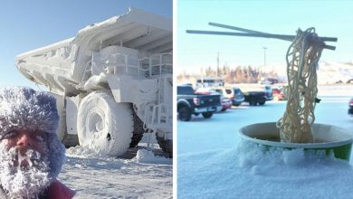 Photo of 15 Photos Show How Difficult But Fascinating It Can Be To Face Winter In Freezing Weather.