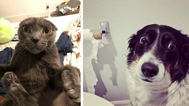 Photo of 12 Pets Caught Red-handed By Their Owners In Hilarious And Disastrous Situations.