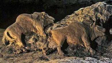 Photo of Two Bisons Carved 15,000 Years Ago Have Been Found In A French Cave They Are Perfectly Preserved.