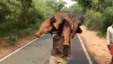 Photo of A Ranger Carries A Baby Elephant On His Back: The Heroic Rescue.