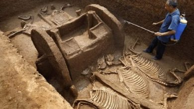Photo of 8 Incredible Archaeological Sites Found By Chance.