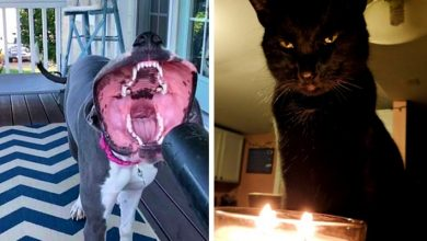 Photo of 15 Times Owners Were Terrified Of Their Pet's Appearance.
