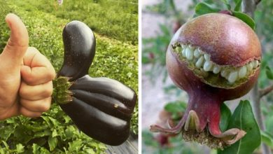Photo of When Nature Comes To Life, 20 Examples Of Vegetables And Fruits With Bizarre And Almost Human Shapes.