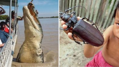 Photo of 20 Animals That Are So Big They Don't Look Real.