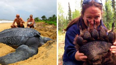 Photo of Unexpected Greatness: 15 Incredible Photos Show Us Animals At Their True Size.