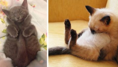 Photo of 18 Pictures Of Sleeping Cats In The Most Absurd Positions And Places.
