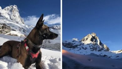 Photo of Rescue Dog Survived 16 Days In Matterhorn Glaciers At -25 ° C
