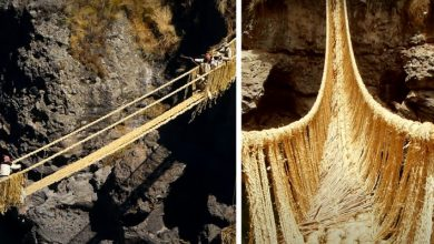 Photo of Over 500-year-old Inca Bridge Collapses: Local Tribes Rebuild It By Weaving Ropes.