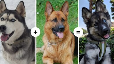 Photo of 15 Dogs With Fascinating And Unusual Characteristics Show The Result Of Crossing Different Genes.