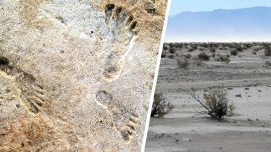 Photo of These Fossil Footprints Show Humans Were In North America Much Earlier Than Previously Thought.