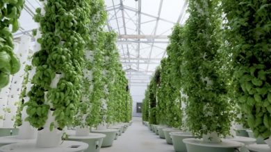 """Photo of Aeroponic Agriculture: The Innovative Technique Of """"Cultivation"""" Without Soil."""