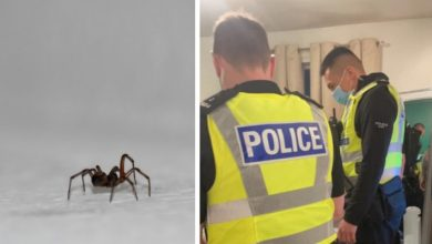 Photo of Girl Sees Spider In Her House And Screams So Loud Neighbors Call Police.